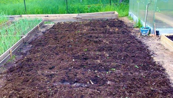 Если томаты болели фитофторозом, почву после них нужно обязательно обеззаразить
