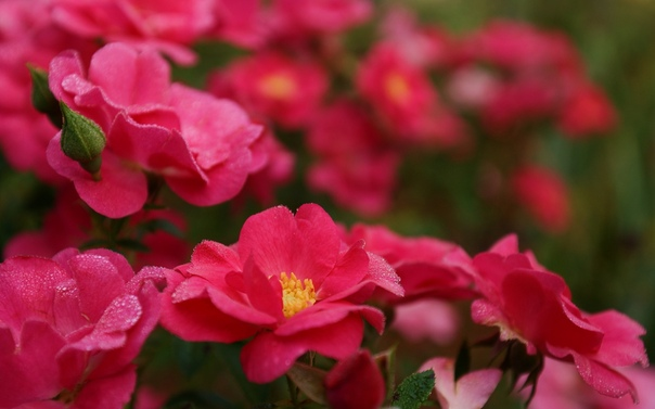 Обои Цветы Бесплатно