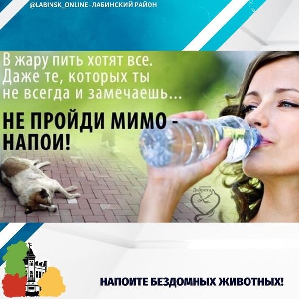 картинки напоите животных в жару
