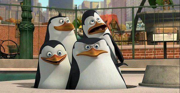 сварную или демотиваторы с пингвинами из мадагаскара переменчивость трендов, этнический