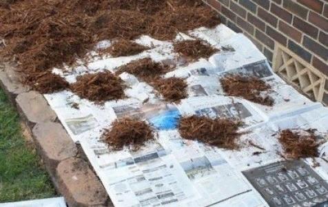 Как избавиться от сорняков на грядке или клумбе