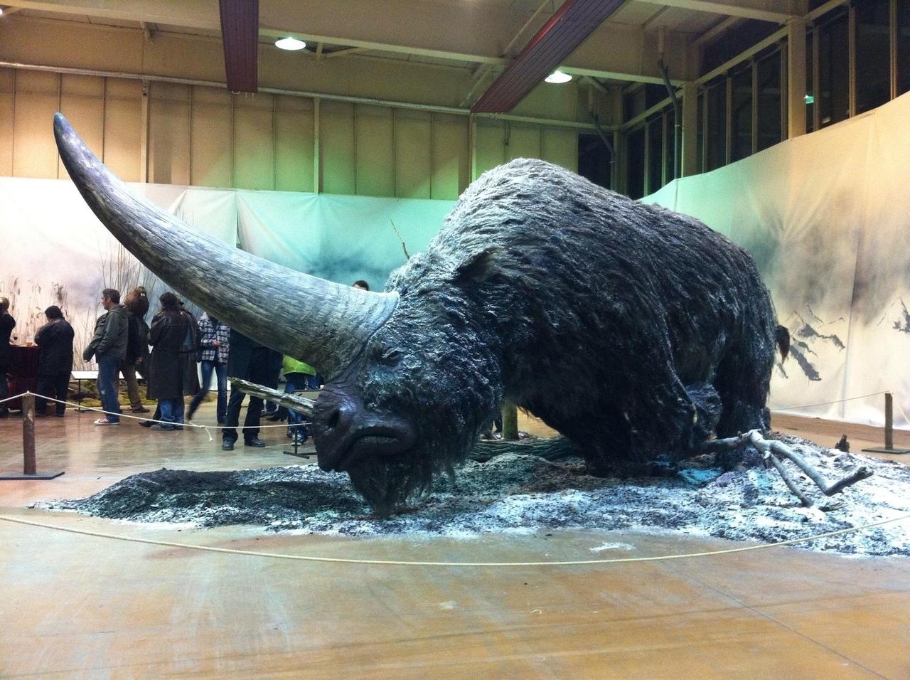 Эласмотерий - древний вид носорогов, живший когда-то на Земл