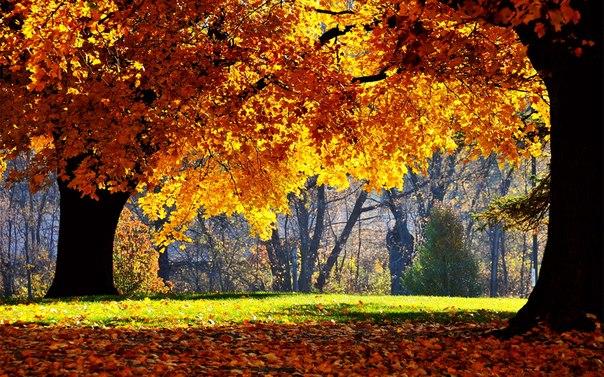 Обои На Экран Осень Скачать
