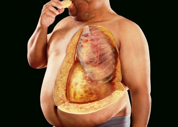 Диета для уменьшения жировой прослойки