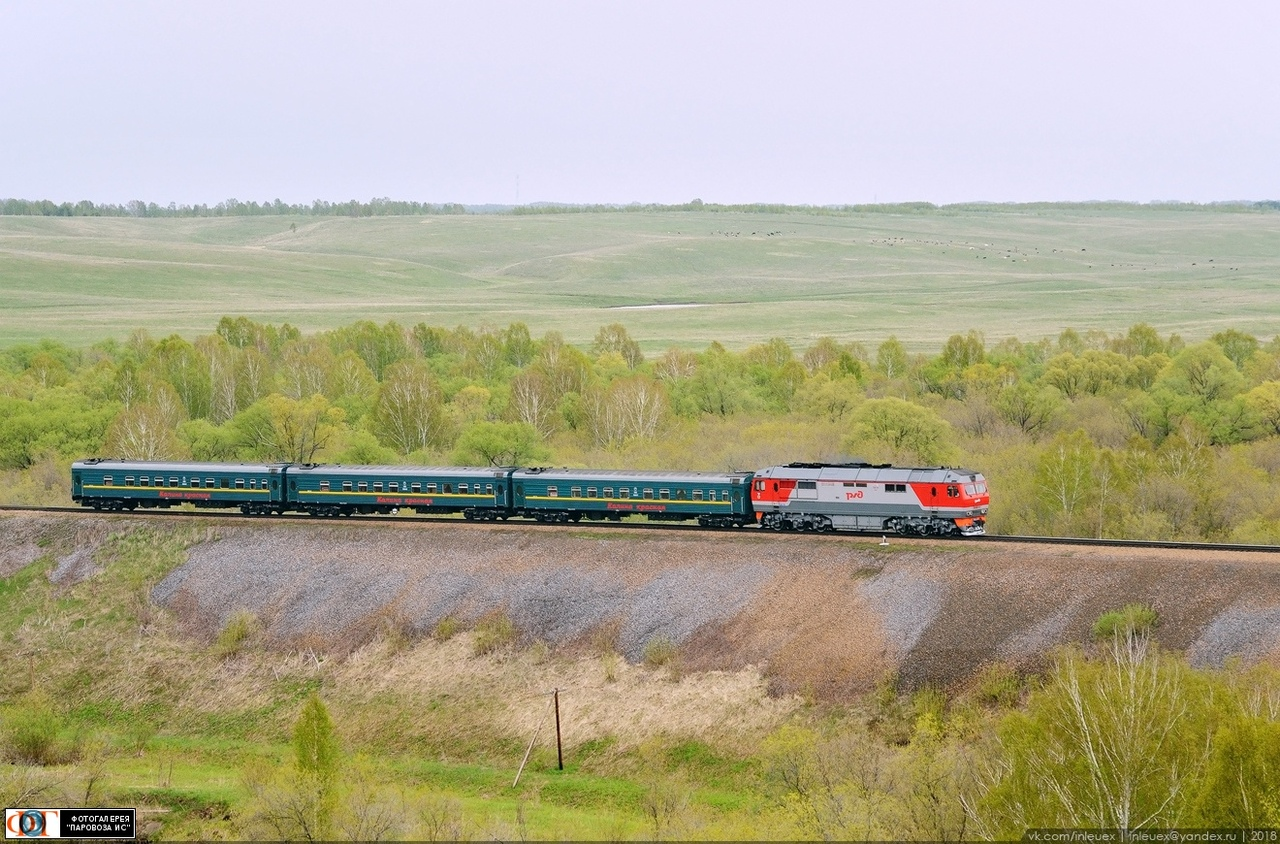 калина красная поезд картинки среднерослое, пирамидальной
