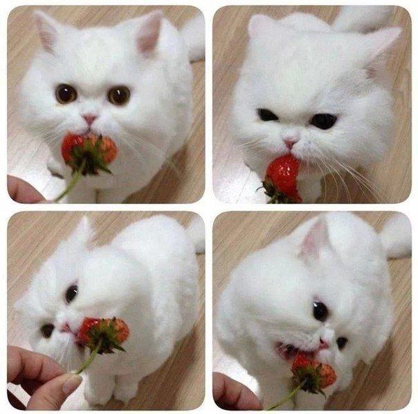 Котик, который любит клубничку